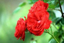 Vẻ đẹp tâm hồn người phụ nữ trong tình yêu qua bài Sóng của Xuân Quỳnh