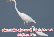 Cảm nhận của em về bài thơ Con cò- Chế Lan Viên
